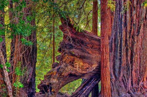 artesa-vineyard-sonoma-county-redwoods-deforestation